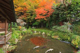 秋の寂光院 紅葉と四方正面の池の写真素材 [FYI04077208]