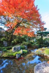 秋の実光院庭園 契心園の写真素材 [FYI04077209]