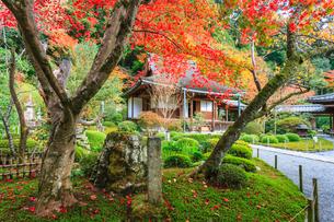 秋の寂光院 紅葉と本堂の写真素材 [FYI04077210]