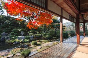秋の実光院庭園 契心園の写真素材 [FYI04077221]