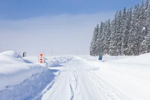 冬の朝の雪原と圧雪路と除雪用路肩目印の写真素材 [FYI04077503]