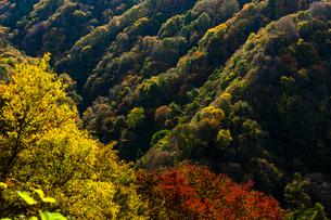 紅葉の山間の写真素材 [FYI04077512]