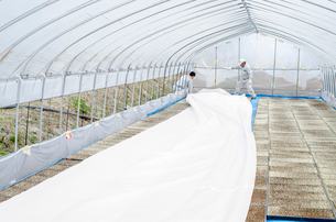 苗床作り 苗床をビニールハウスへ搬入、敷き詰めの写真素材 [FYI04077517]