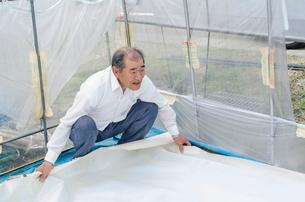 苗床作り 苗床をビニールハウスへ搬入、敷き詰めの写真素材 [FYI04077524]