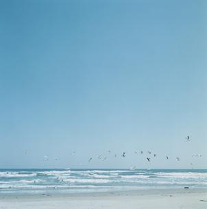 海岸に飛ぶ鳥の群れの写真素材 [FYI04077755]