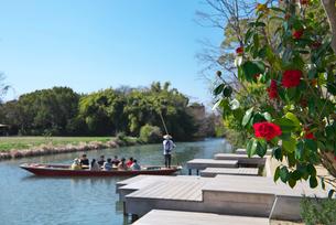 水辺の散歩道に咲く椿の写真素材 [FYI04078211]