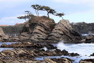 3月,三浦半島の荒崎海岸-美しい地層美の海岸の写真素材 [FYI04078352]