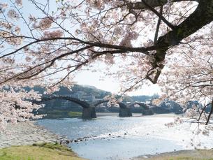 山口 錦帯橋の桜の写真素材 [FYI04078450]