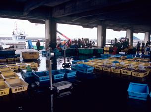 魚市場の写真素材 [FYI04078657]