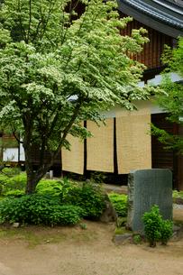 ヤマボウシ咲く瑞岸寺 江馬氏の菩提寺の写真素材 [FYI04078915]