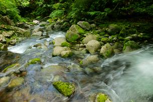 叺谷(かますだに)の渓流 長良川の源流 の写真素材 [FYI04078933]