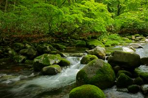 叺谷(かますだに)の渓流 長良川の源流 の写真素材 [FYI04078934]
