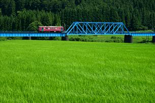 青田と長良川鉄道 長良川第三橋梁の写真素材 [FYI04078947]