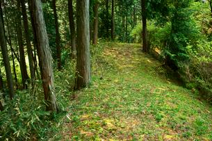 福地城址(芭蕉公園) 本丸周囲の土塁(南側)の写真素材 [FYI04079011]