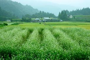 ソバ畑と秋の田の写真素材 [FYI04079046]