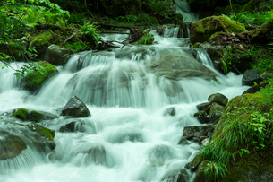 馬瀬川・支流の流れの写真素材 [FYI04079112]