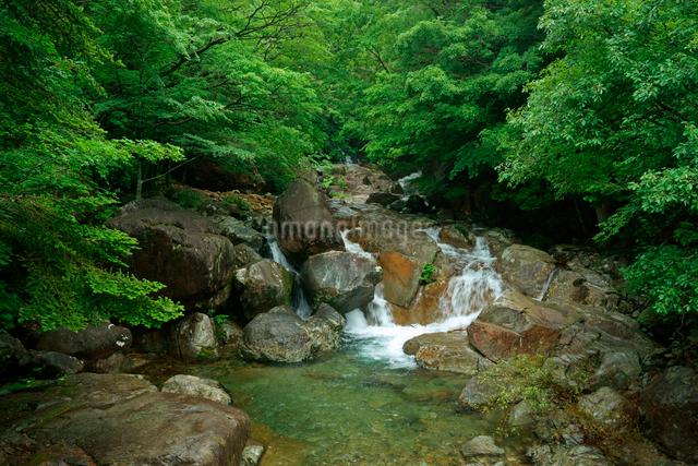 片知渓谷(かたぢけいこく) 岳水橋から上流の滝を望む の写真素材 [FYI04079149]