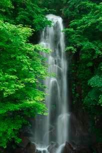 駒ヶ滝 の写真素材 [FYI04079152]
