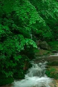 叺谷・長良川の源流 の写真素材 [FYI04079164]