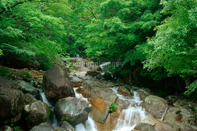 片知渓谷(かたぢけいこく) 岳水橋から上流の滝を望む の写真素材 [FYI04079165]