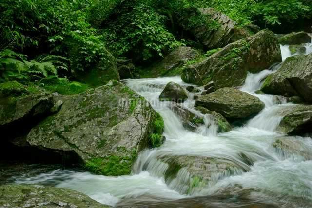 渓流 阿弥陀ヶ滝下流の前谷川  の写真素材 [FYI04079177]