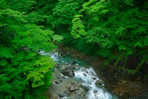 高樽の滝下流の西股谷 付知峡 の写真素材 [FYI04079183]