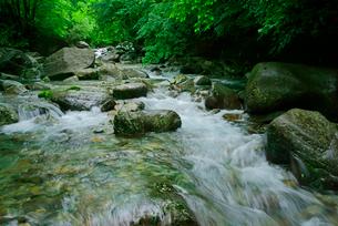 乙女渓谷・加子母川 の写真素材 [FYI04079186]