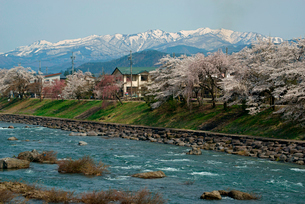 桜と長良川 大日岳遠望 の写真素材 [FYI04079195]