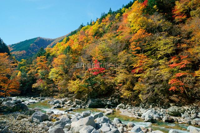 紅葉・馬瀬川,の写真素材 [FYI04079196]
