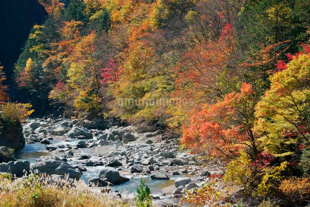 紅葉・馬瀬川,の写真素材 [FYI04079200]