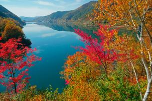 紅葉の味噌川ダム湖,の写真素材 [FYI04079222]