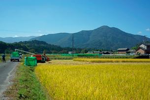 稲刈り・烏帽子岳を望む,の写真素材 [FYI04079232]