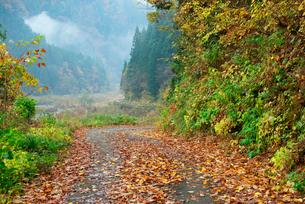 落葉の林道,根尾西谷川沿い,の写真素材 [FYI04079241]