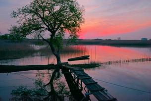 夜明け,揖斐川と川舟の写真素材 [FYI04079247]