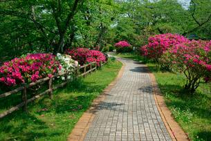 ツツジ咲く船頭平河川公園の写真素材 [FYI04079272]
