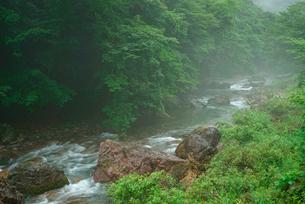 根尾東谷川の写真素材 [FYI04079284]