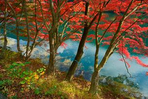 下原ダム湖 湖畔の紅葉 飛騨川の写真素材 [FYI04079285]