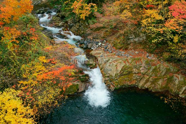 鷲見川 長良川支流 の紅葉 大滝橋より望むの写真素材 [FYI04079286]