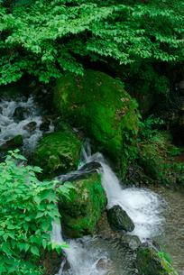 押又谷の渓流の写真素材 [FYI04079291]