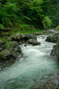 長谷川 粕川の支流の写真素材 [FYI04079295]