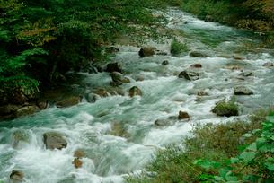 弓掛川 馬瀬川支流の写真素材 [FYI04079298]