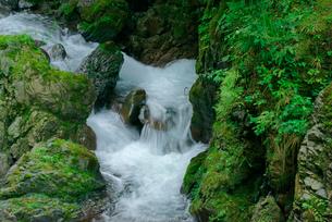 押又谷の渓流の写真素材 [FYI04079300]
