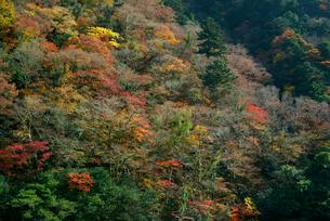 中山七里 飛騨川 釜ヶ渕の紅葉の写真素材 [FYI04079303]