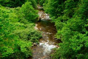 青屋川・飛騨川の支流 乗鞍橋より上流を望むの写真素材 [FYI04079319]