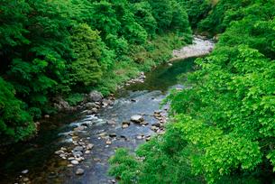 新緑の吉田川・市島大橋より上流を望む の写真素材 [FYI04079327]