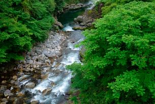 新緑の吉田川・市島大橋より下流を望む の写真素材 [FYI04079328]