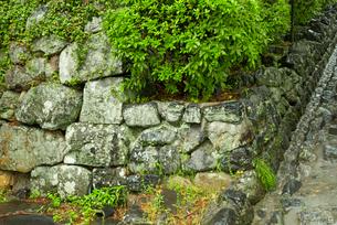 犬山城 樅の丸虎口 右側の石垣の写真素材 [FYI04079337]