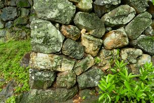 犬山城 樅の丸石垣の写真素材 [FYI04079348]