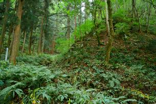 鷲見城遺跡 三の木戸付近の崖の写真素材 [FYI04079412]