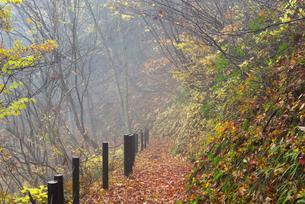 鷲見城遺跡 三の木戸より上の城道の紅葉の写真素材 [FYI04079428]